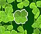 Lucky Clover Icon