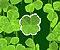 Lucky Clover Icon